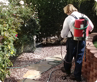 Termite Control in San Diego