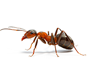 Ant Removal San Diego