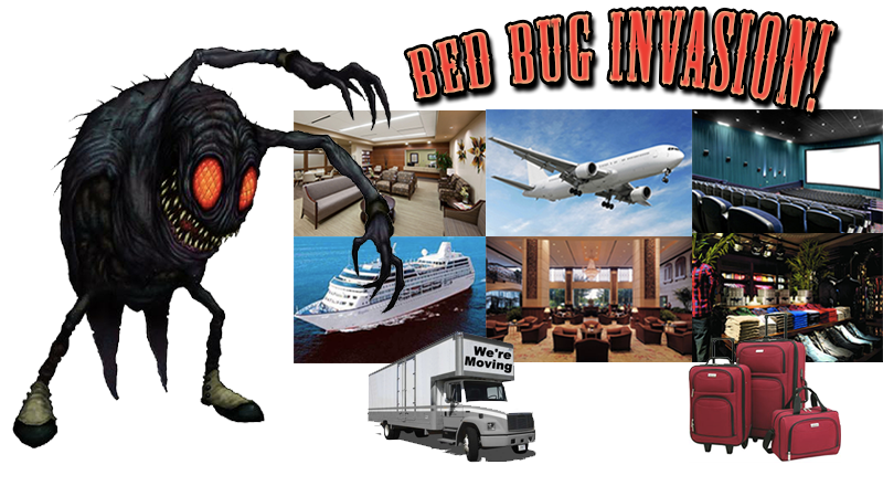 How To Remove Bed Bugs San Diego