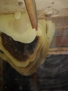 How to Remove Bee Hive